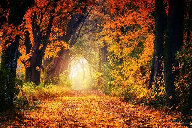 autumn-3186876_640